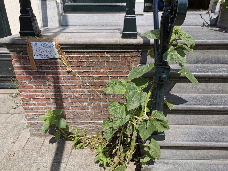 Ook de zonnebloemen - met veel emotionele waarde - moesten het ontgelden. Beeld Juliët Boogaard