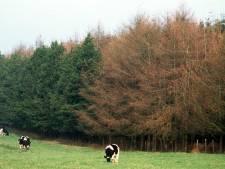 La Botte du Hainaut se met à l'agroforesterie