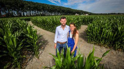 Pure nostalgie: gigantisch maïsdoolhof keert na twintig jaar terug