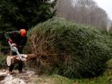 Dit is de kerstboom die in de Tweede Kamer komt