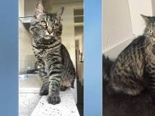 Gruwelijke dood van katten Sjef en Kareltje zorgt voor 113.000 handtekeningen voor 'dieren in de Grondwet'