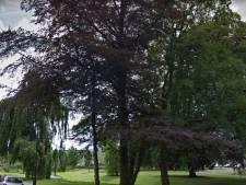 Oude beuk in Lievevrouwepark Vught is ziek, onveilig en wordt gekapt