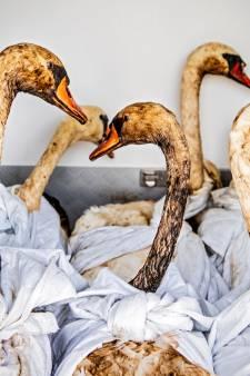 Mensen uit hele land melden zich om met olie besmeurde vogels te redden