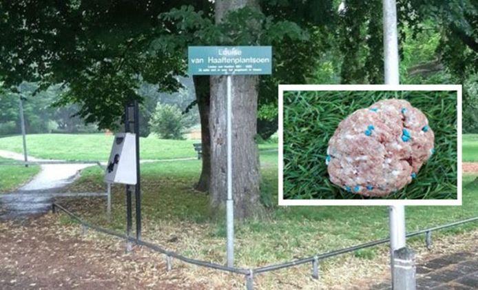 Giftige gehaktballen in een park.