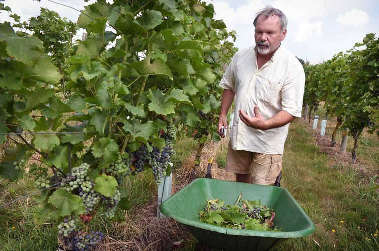 Rob Roth op zijn wijnveld van 1,5 hectare. Beeld Marcel van den Bergh / de Volkskrant