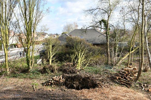 In de Drie Eikenstraat in  Edege gingen enkele bomen tegen de vlakte en beschadigden ook een huis.