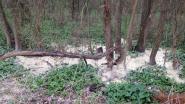 Sluikstorter stort lading zand in Floordambos