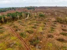 Onbegrip over kap duizenden bomen bij Lemelerberg: 'Dit moet nu stoppen'