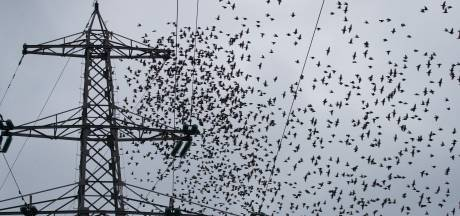 Duizenden spreeuwen tekenen de lucht in Raalte