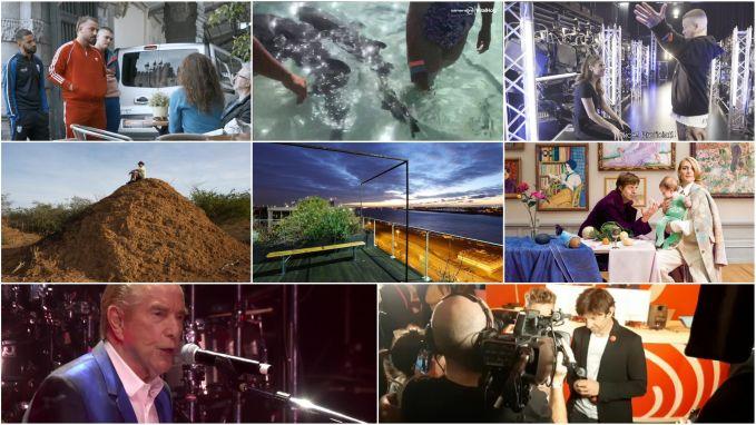 De 'ongevaarlijke' haai die kind beet en de 9 andere strafste video's van deze week