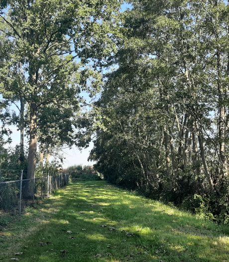 Zwembadraad en natuurvereniging boos op voorgenomen bomenkap