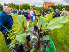 Exotische plantenmarkt Agelo: het geheim van een bloeiende tuin