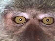 Il retrouve son téléphone rempli de selfies de singe