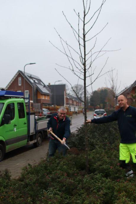Eerste van 180 nieuwe Rhedense bomen de grond in