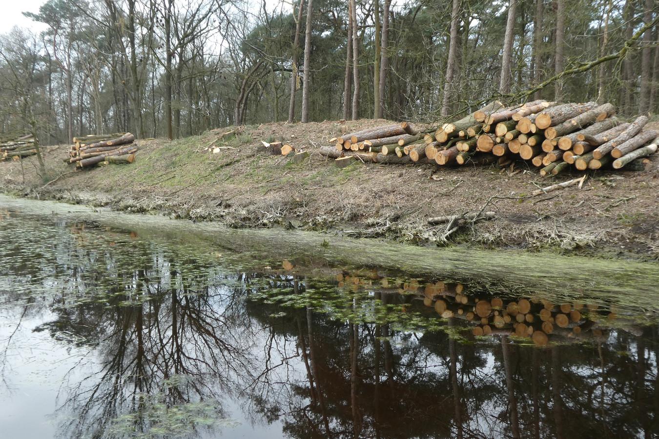 Kaalslag bij de Heiloop in de Kampina. Volgens Natuurmonumenten en het waterschap de Dommel nodig voor een andere waterhuishouding bij de blauwgraslandjes.