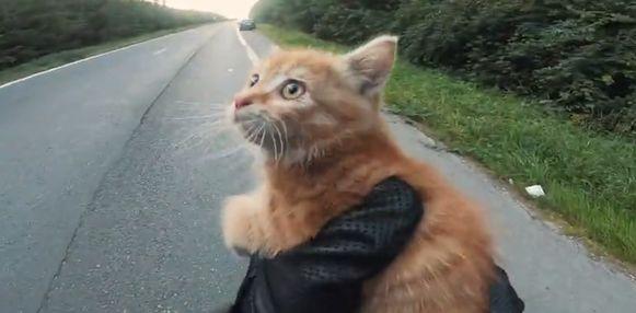 Het katje keek Quentin ietwat verbaasd aan bij zijn reddingspoging.