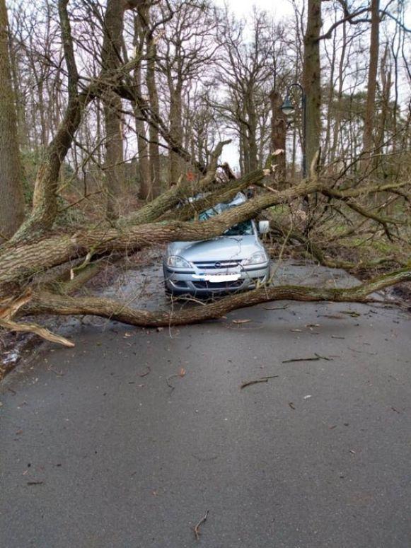 Aan kasteel Ravenhof belandde een boom op een auto. Niemand liep verwondingen op.