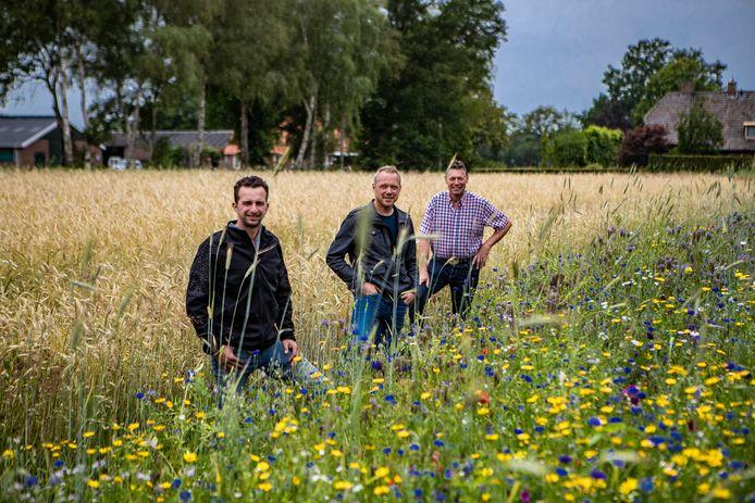 """Arno Meijerman, Geert Stevens en Wim Steegink (vanaf links) bij de wilde bloemen. """"Ik moet zeggen dat ik er enorm van geniet."""""""