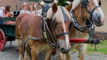 Gratis huifkartochten met Brabantse trekpaarden