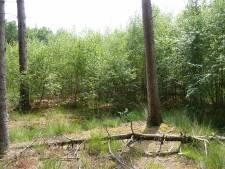 Maashorst heeft meer aan rust dan aan   300.000 nieuwe bomen struiken