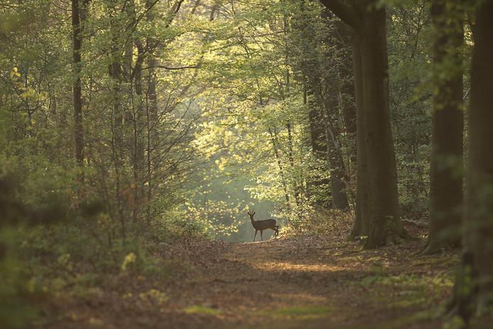 Goed voorbereid op pad en een portie geduld zijn essentieel voor het maken van een goede natuurfoto.