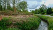 Oude en zieke bomen gekapt langs Dreef