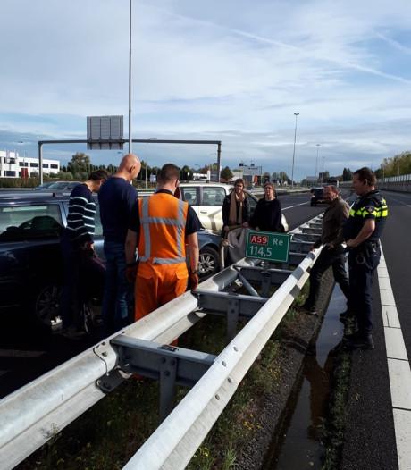 Jonge zwaan landt op snelweg bij Waalwijk en blijft rustig zitten