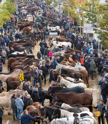Paardenmarkt in Hedel niet vervolgd, Dierenbescherming haalt bakzeil na aangifte