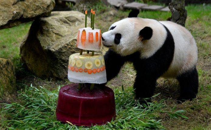 Xing Ya geniet van de taart die de panda's kregen op hun verjaardag.
