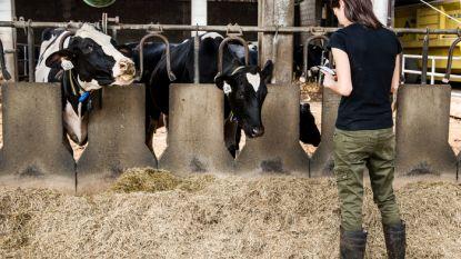 Vrouw uit Lubbeek laat 1,3 miljoen euro na aan Vlaams Dierenwelzijnsfonds