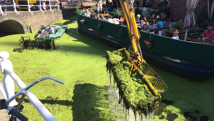 Enorme hoeveelheden kroos zijn gisteren uit de gracht geschept, zodat het water beter kan doorstromen.