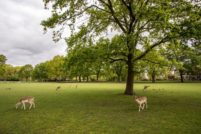 De hertenkamp in Lochem blijft in eigendom van de gemeente. Opnieuw strandde een  poging van het college van B en W  om de voorziening te privatiseren.