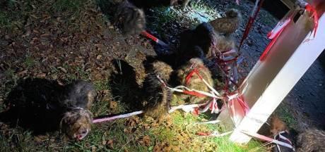 Telefoon Dierentehuis Arnhem roodgloeiend voor opvang 17 verwaarloosde hondjes