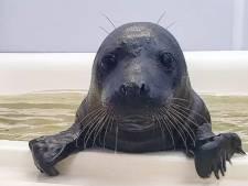 Gemist? Man neergestoken in Vlaardingen en zeehondenpup zo zwart als 'zwarte panter'