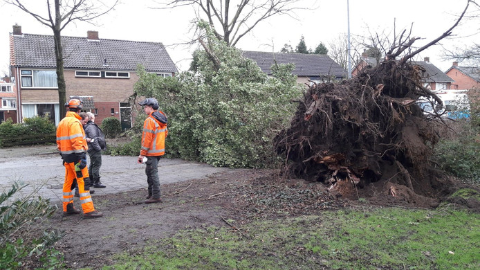 De omgevallen boom op de Vriezenveenseweg