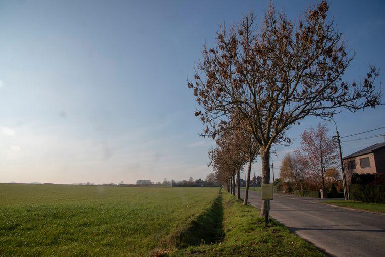 De bomenrij in de Scheldeweg is ziek en veroorzaakt schade aan het drainagesysteem van de landbouwgrond ernaast.