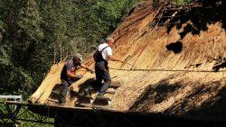 """Dakwerkers herstellen dak van historische hoeve bij tropische temperaturen: """"Riet weerkaatst de zon nog eens extra"""""""