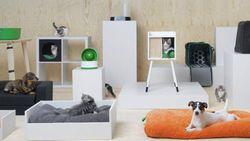 Stijlvol en budgetvriendelijk: Ikea lanceert eerste lijn voor honden en katten