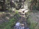 Vanaf de Zandstraat in Moergestel gaat de Rosep door de bossen heen kronkelen