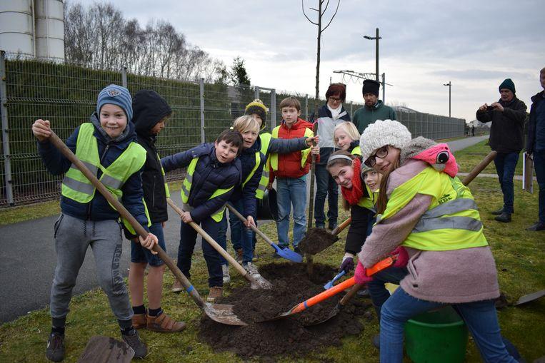 Vorig jaar plantten de schoolkinderen van Bassevelde de boompjes aan.
