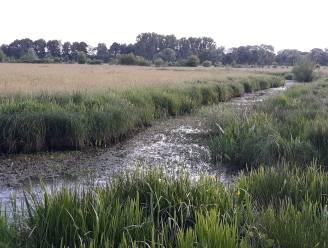 """Natuurpunt roept bezoekers Mechels Broek op: """"Parkeer aan De Nekker"""""""
