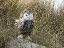 Een op acht vogelsoorten met uitsterven bedreigd