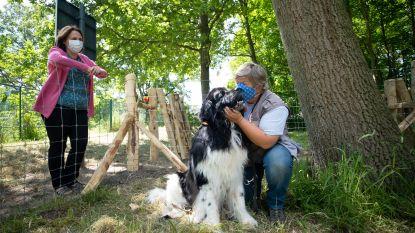"""Hondenlosloopzone in tuin van woonzorgcentrum Sint-Elisabeth: """"Bezoekers kunnen nu hun viervoeter meebrengen"""""""