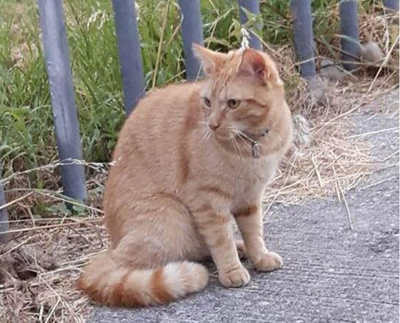 DJ Karel, de kat van Marga Smolders, overleefde de mishandeling niet.