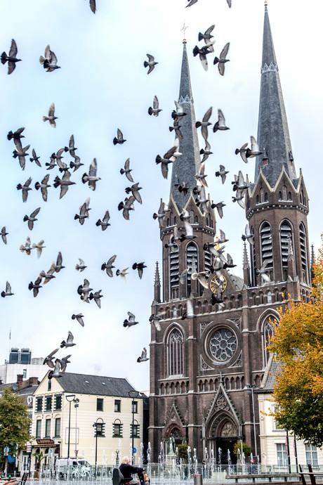 Tilburg is 'dwarse duivenvoerders' beu, Febo ook: voeren voortaan strafbaar