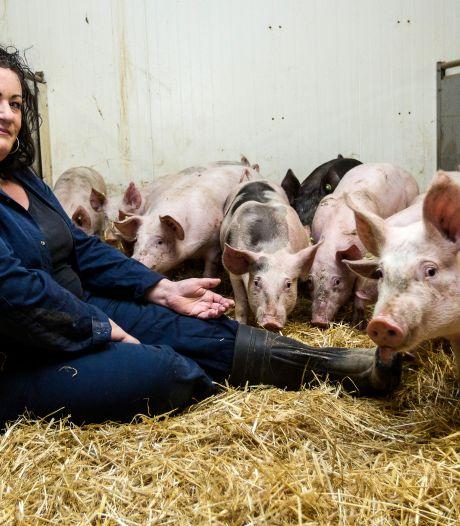 Angst regeert bij boeren na 'overval' op varkensstal: 'We voelen ons machteloos en vogelvrij'