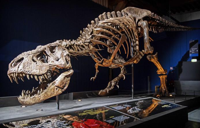 Het skelet van T-Rex 'Trix' in  Naturalis in Leiden