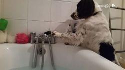 Baasje geniet van warm bad... tot hond de kraan op koud draait