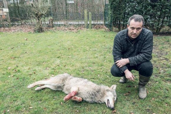 Jan Loos bij wolf Roger, die werd doodgereden in Opoeteren.