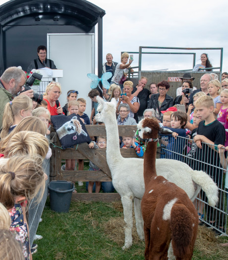 Alpaca's Lodewijk en Josephine beloven elkaar trouw voor honderden mensen